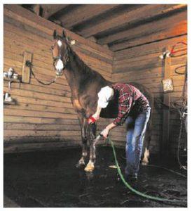 rubber horse mats
