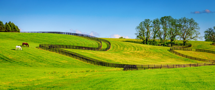 7 Factors To Help Choose The Best Horse Fencing Saratoga