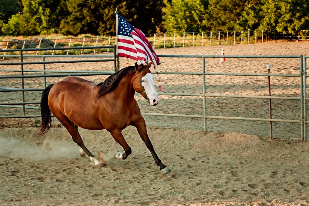 Memorial Day Horse American Flag