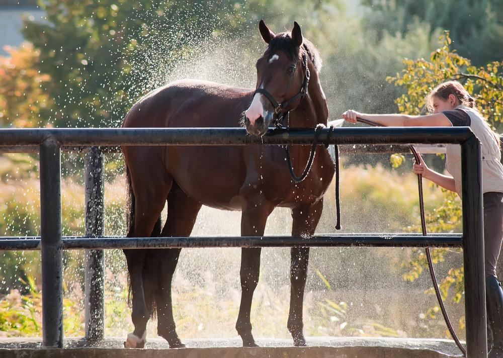 equine heat stress