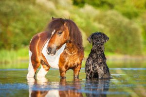 overheated horses