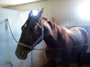horse barn grooming