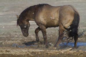 horse hoof problems mud