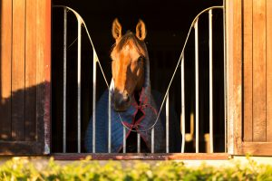 favorite horse barn features