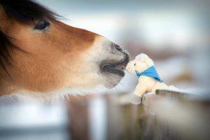 horse kiss snow