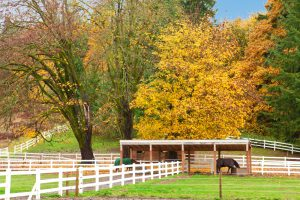 horse lovers fall chore list