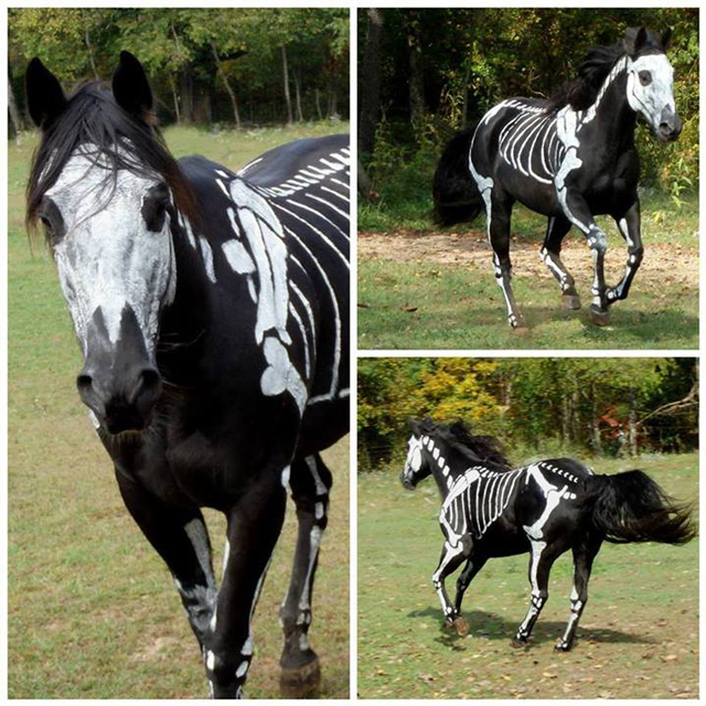 Haunting Halloween Horse Costume Ideas