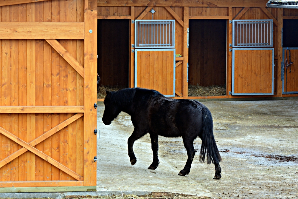 Designing A Great Horse Barn Requires These 3 Things!