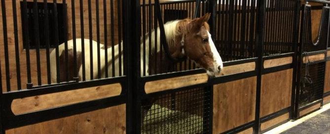 Cleaning Your Horse Stall