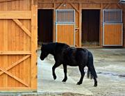 great horse barn